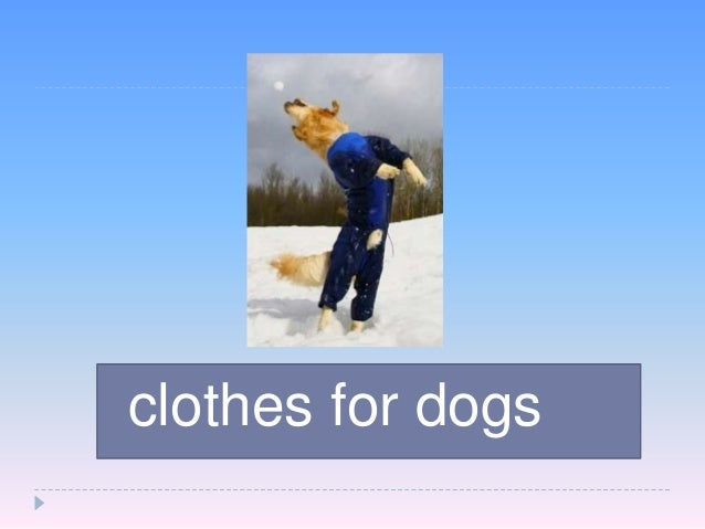 clothes  for dogs