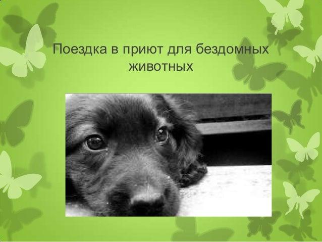 Поездка в приют для бездомных животных