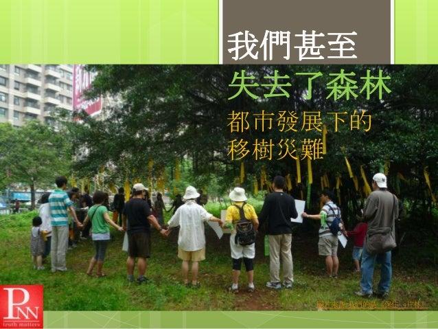 我們甚至 失去了森林 都市發展下的 移樹災難  圖片來源:我們的島《保住一片林》