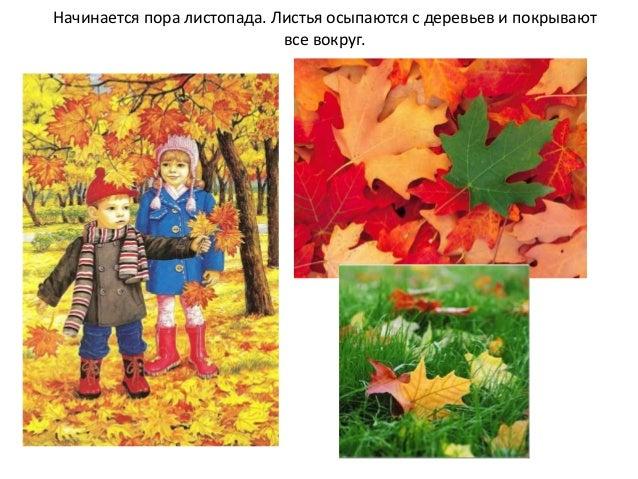 картинки признаки осени для детей