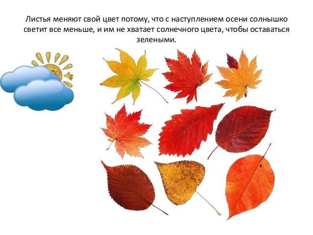 картинка для детей признаки осени