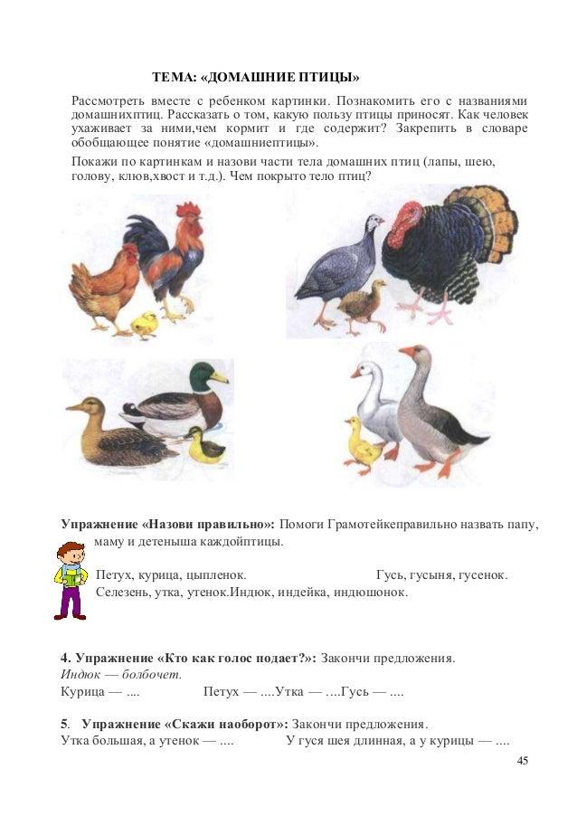 домашние птицы названия и фото