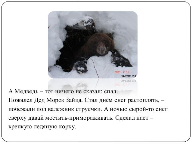 Заяц косач медведь зимой картинки