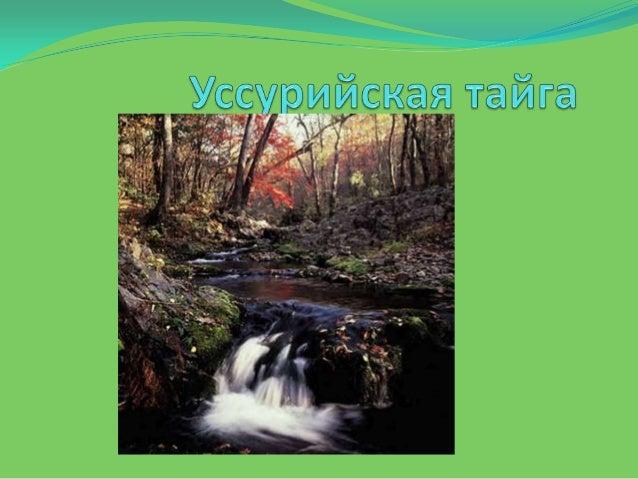 Особое место в лесной зоне занимают леса Приморского края, так называемой уссурийской тайги. Они представляют собой своеоб...