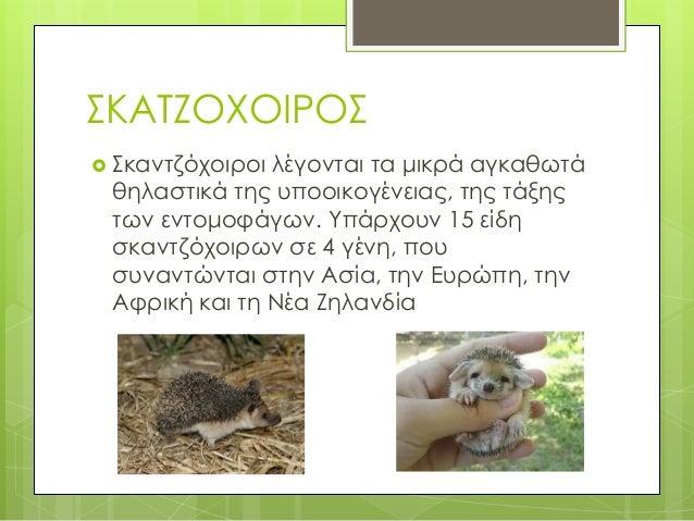 ΖΩΑ ΤΗΣ ΕΞΟΧΗΣ Slide 3