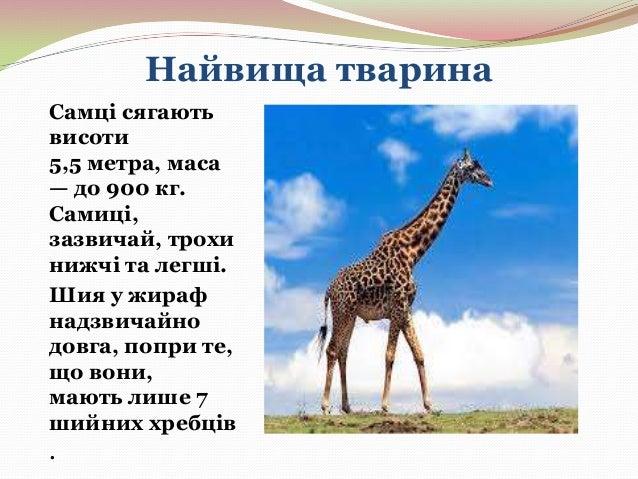 Найшвидша тварина Найшвидший наземний ссавець гепард, який, коли женеться.за здобиччю, розвиває швидкість 120 км/год.