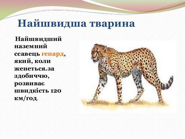 Реферат на тему тварини рекордсмени 3547