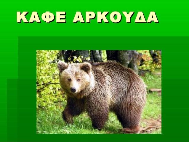 ΚΑΦΕ ΑΡΚΟΥΔΑ