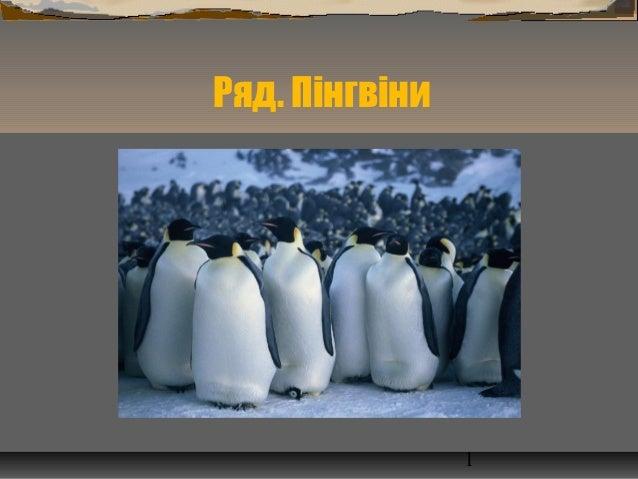 Ряд. Пінгвіни  1