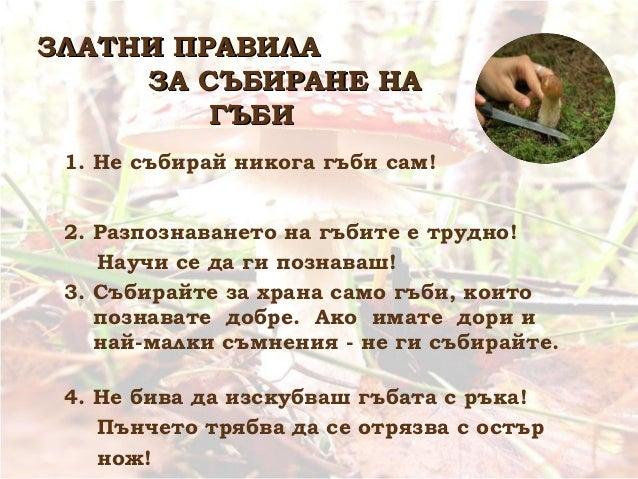 5. Не унищожавайте гъбите, които не познавате! Вредни гъби няма и всяка гъба има своето място в природата. 6. Не събирайте...