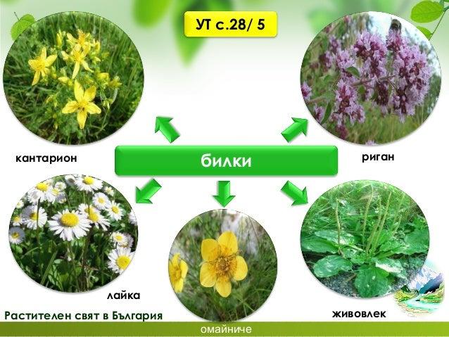 Защитени територии в България За опазването на ценни растителни видове са създадени защитени територии – паркове и резерва...