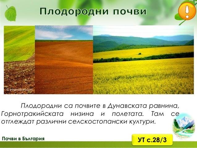 Почви в България богат и разнообразен дървета храсти тревисти
