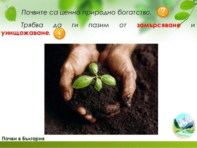 Растителен свят в България широколистни гори бук дъб елша явор бреза УТ с.28/ 4