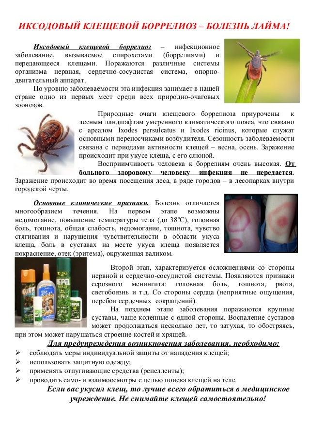 copy of lyme disease brochure template