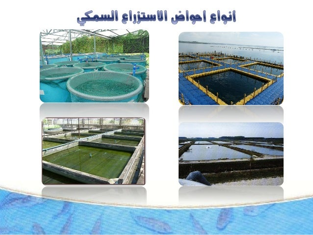 إنشاء احواض الاستزراع السمكى ( مصطفى الخولي ) Slide 3