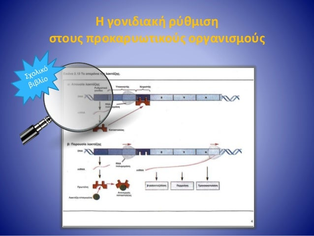 Η γονιδιακή ρύθμιση στους προκαρυωτικούς οργανισμούς