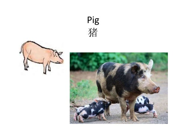 Pig 猪