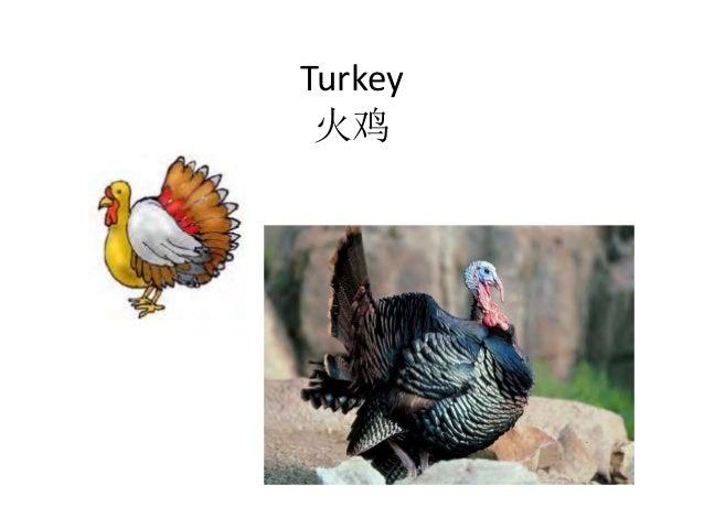 Turkey 火鸡