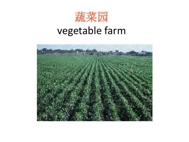 蔬菜园 vegetable farm