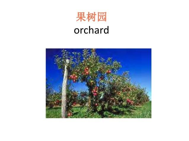 果树园 orchard