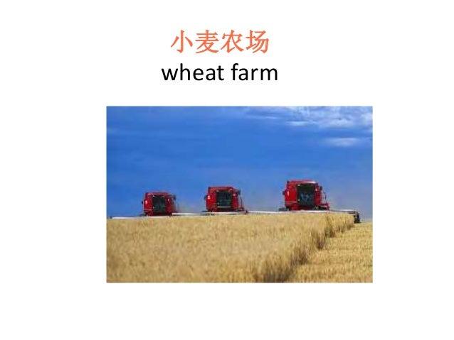 小麦农场 wheat farm