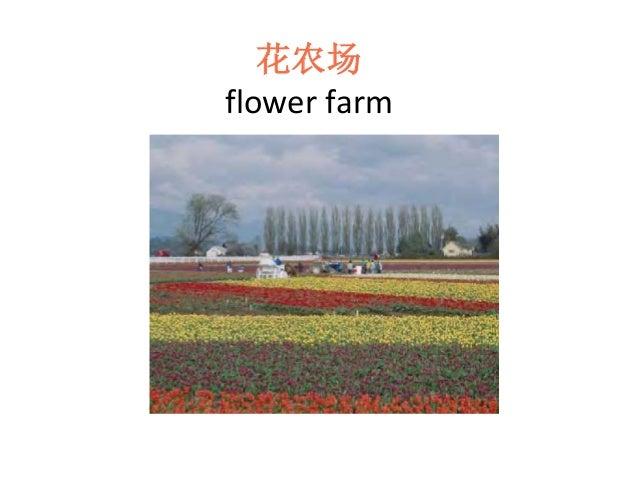 花农场 flower farm