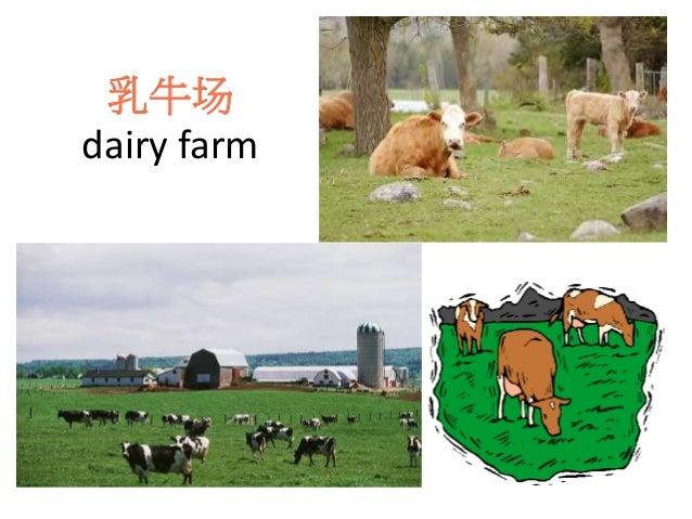 乳牛场 dairy farm