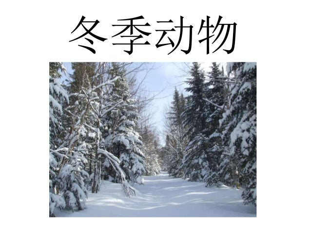 冬季动物 & 企鹅 Slide 1