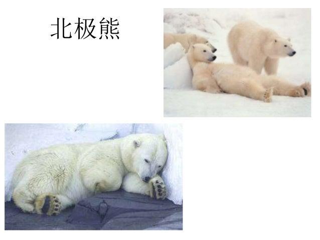 冬季动物 & 企鹅 Slide 2