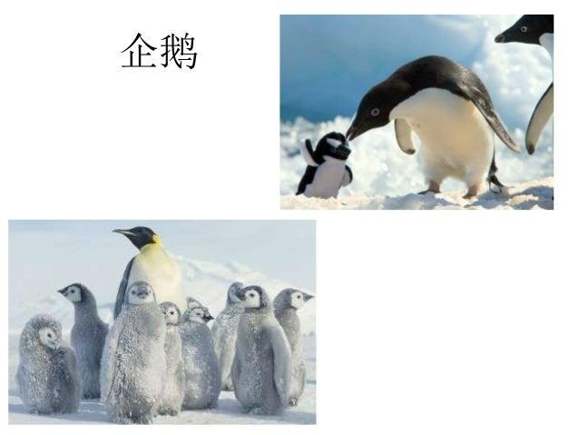 冬季动物 & 企鹅 Slide 3