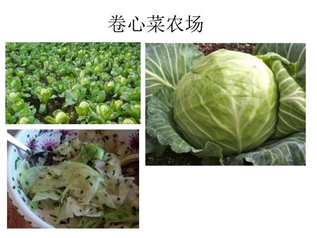 卷心菜农场