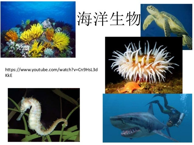 海洋生物 https://www.youtube.com/watch?v=Cn9HsL3d KkE