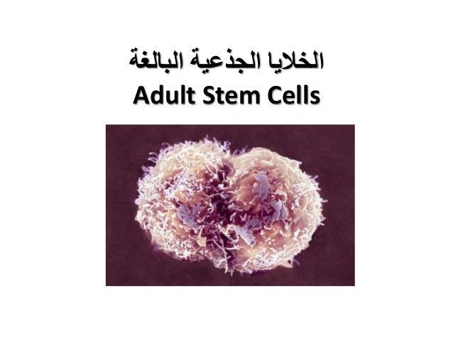 البالغة الجذعية الخاليا Adult Stem Cells