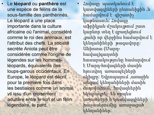 • Le léopard ou panthère est une espèce de félins de la sous-famille des panthérinés. Le léopard a une place importante da...
