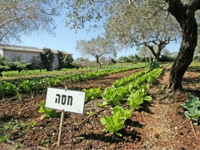 The Organic Garden Slide 2