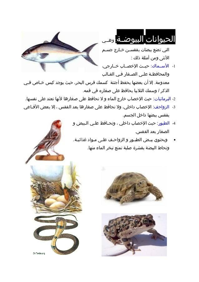الحيواناتضةضالبيوض:ضضيضوه التيتضعبيضاتضنضيفقسضارجضخضمضجس النثىومنأمثلةذلك: 1...
