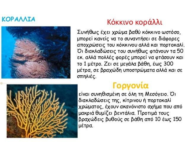 ΚΟΡΑΛΛΙΑ Κόκκινο κοράλλι Γοργονία είναι συνηθισμένη σε όλη τη Μεσόγειο. Όι διακλαδώσεις της, κίτρινου ή πορτοκαλί χρώματος...