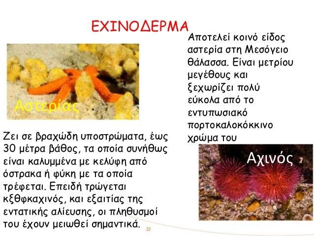 ΕΧΙΝΟΔΕΡΜΑ Αχινός Αστερίας Αποτελεί κοινό είδος αστερία στη Μεσόγειο θάλασσα. Είναι μετρίου μεγέθους και ξεχωρίζει πολύ εύ...