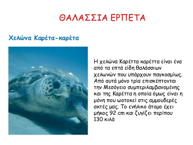 ΘΑΛΑΣΣΙΑ ΕΡΠΕΤΑ Χελώνα Καρέτα-καρέτα Η χελώνα Καρέττα καρέττα είναι ένα από τα επτά είδη θαλάσσιων χελωνών που υπάρχουν πα...
