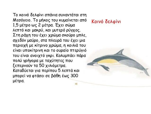 Κοινό δελφίνι Το κοινό δελφίνι σπάνια συναντάται στη Μεσόγειο. Το μήκος του κυμαίνεται από 1,5 μέτρο ως 2 μέτρα. Έχει σώμα...