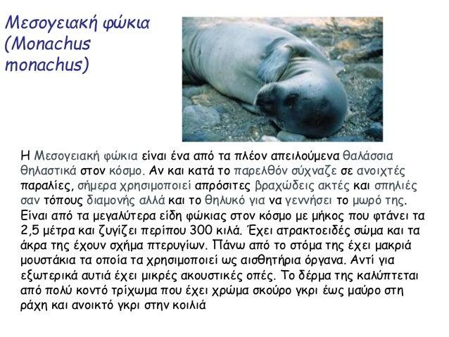 Μεσογειακή φώκια (Monachus monachus) Η Μεσογειακή φώκια είναι ένα από τα πλέον απειλούμενα θαλάσσια θηλαστικά στον κόσμο. ...