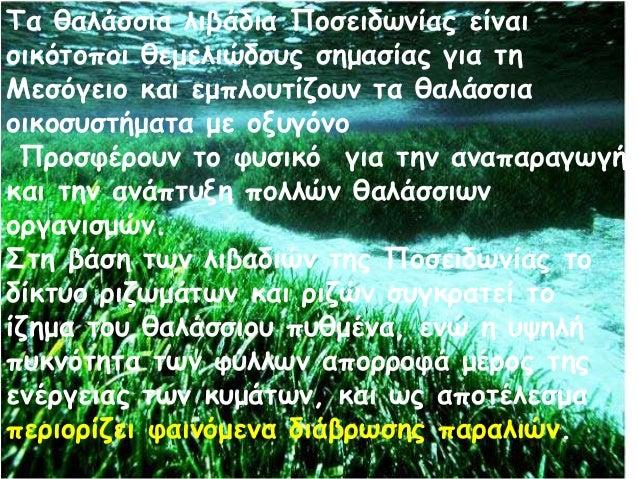 Τα θαλάσσια λιβάδια Ποσειδωνίας είναι οικότοποι θεμελιώδους σημασίας για τη Μεσόγειο και εμπλουτίζουν τα θαλάσσια οικοσυστ...