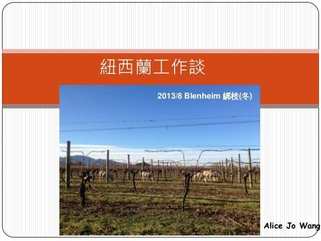 紐西蘭工作談 2013/8 Blenheim 綁枝(冬) Alice Jo Wang