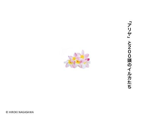 ©  HIROKI  NAGASAWA  「アリヤ」と200頭のイルカたち