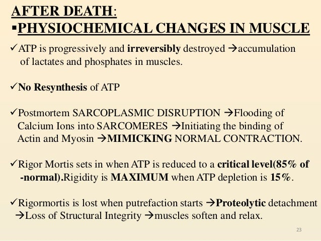 sequence of atp resynthesis Conclusions—during low-flow ischemia simulating an acute myocardial  infarction region, oxidative phosphorylation accounted for 90% of atp synthesis.