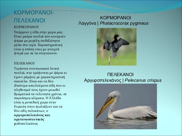 Μεγάλο λευκό λεία μεγάλο μαύρο πουλί