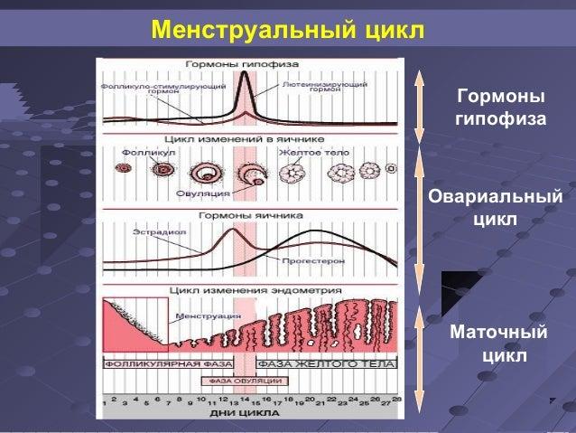 Менструальный цикл  Гормоны  гипофиза  Овариальный  цикл  Маточный  цикл