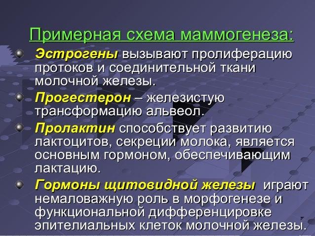 Примерная ссххееммаа ммааммммооггееннееззаа::  ЭЭссттррооггеенныы ввыыззыыввааюютт ппррооллииффееррааццииюю  ппррооттоокко...