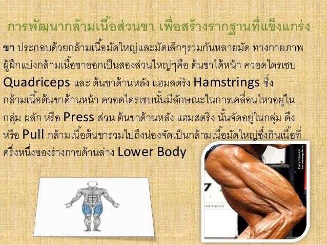 การพัฒนากล้ามเนื้อส่วนขา เพ่อืสร้างรากฐานที่แข็งแกร่ง  ขา ประกอบด้วยกล้ามเนือ้มัดใหญ่และมัดเล็กๆรวมกันหลายมัด ทางกายภาพ  ผ...