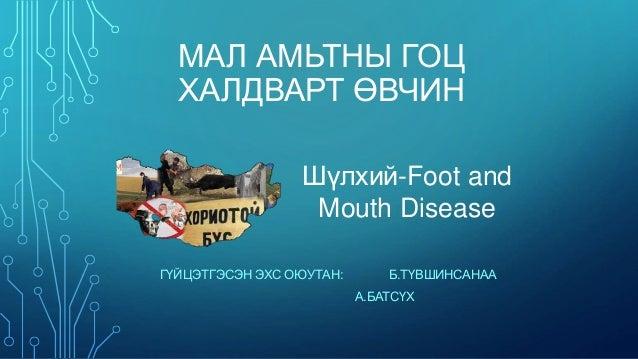 МАЛ АМЬТНЫ ГОЦ  ХАЛДВАРТ ӨВЧИН  Шүлхий-Foot and  Mouth Disease  ГҮЙЦЭТГЭСЭН ЭХС ОЮУТАН: Б.ТҮВШИНСАНАА  А.БАТСҮХ